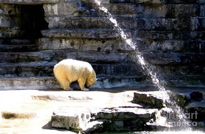Nys Photograph - Polar Bear by Rose Santuci-Sofranko