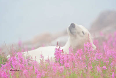 Nanook Photograph - Polar Bear Snooze by Dennis Fast
