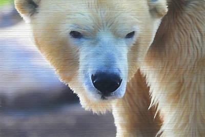 Mixed Media - Polar Bear Wooden Texture by Dan Sproul