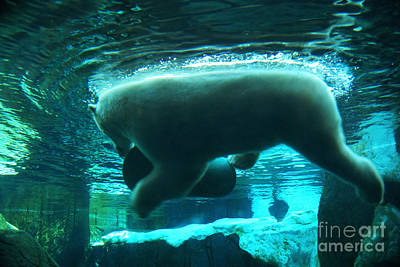 Photograph - Polar Play by Linda Shafer