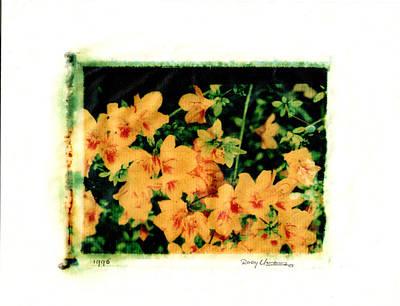 Photograph - Polaroid Flowers by Rudy Umans