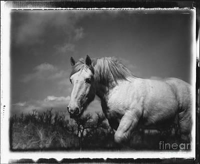 David Paul Photograph - Polaroid Horse by David Paul