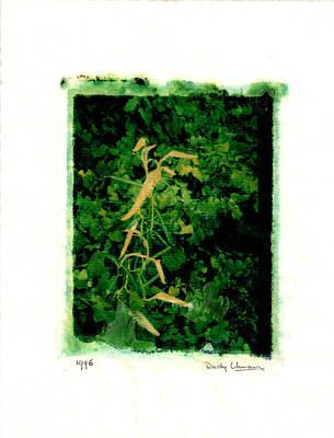 Photograph - Polaroid Plant by Rudy Umans