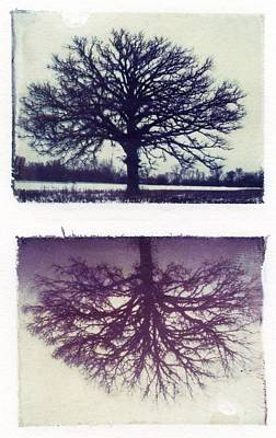 Polaroid Transfer Tree Art Print by Jane Linders