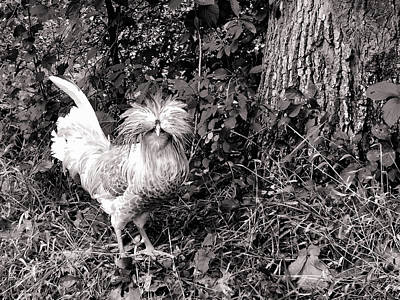 Photograph - Polish Crested Chicken by Susan Maxwell Schmidt