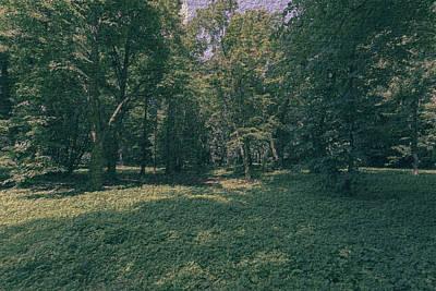 Photograph - Polish Forest At Summer 2017 A Fine Art by Jacek Wojnarowski