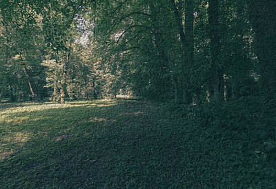 Photograph - Polish Forest At Summer 2017 B by Jacek Wojnarowski