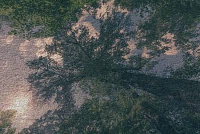 Photograph - Polish Forest At Summer 2017 E by Jacek Wojnarowski