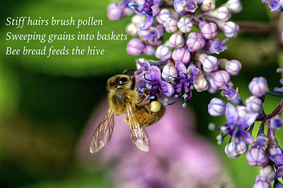 Photograph - Pollen Basket Haiku  by Constantine Gregory