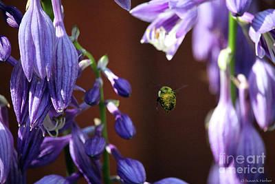 Photograph - Pollen Bomber by Susan Herber