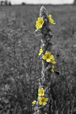 Photograph - Pollen Buzz by Dylan Punke