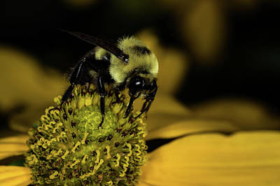 Photograph - Pollen Collector 4 by Jay Stockhaus