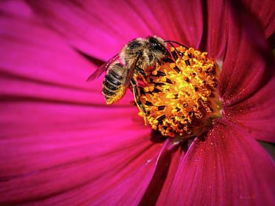 Photograph - Pollen Collector by Bob Orsillo