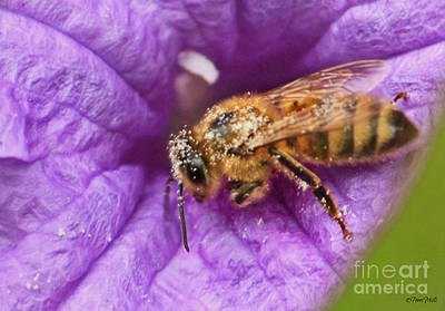 Photograph - Pollen Collector by Terri Mills