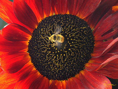 Photograph - Pollen Dance by Rasma Bertz