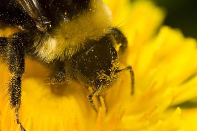 Photograph - Pollen Head by Jouko Mikkola