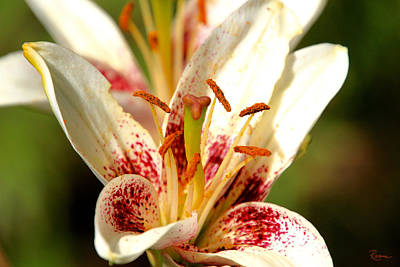 Photograph - Pollen Invitation by Rasma Bertz