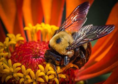 Pollen Plenty Art Print