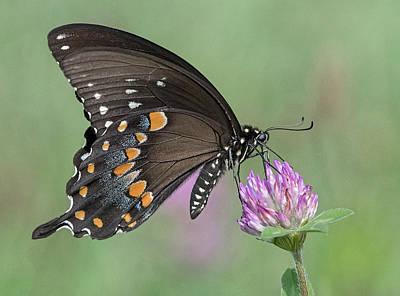 Photograph - Pollinating #1 by Wade Aiken