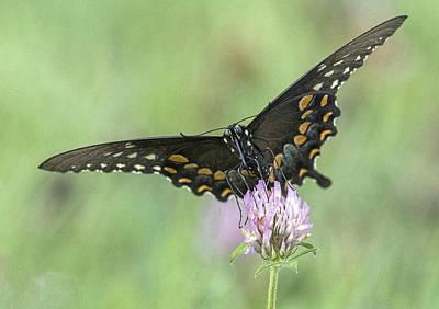 Photograph - Pollinating #2 by Wade Aiken