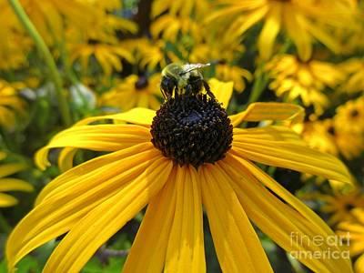 Pollinating Bee Original by John Malone