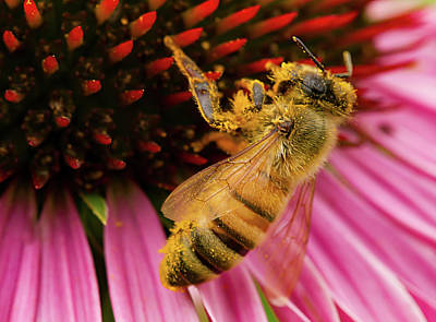 Photograph - Pollinating by Jean Noren
