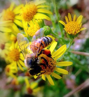 Photograph - Pollination by Lori Seaman