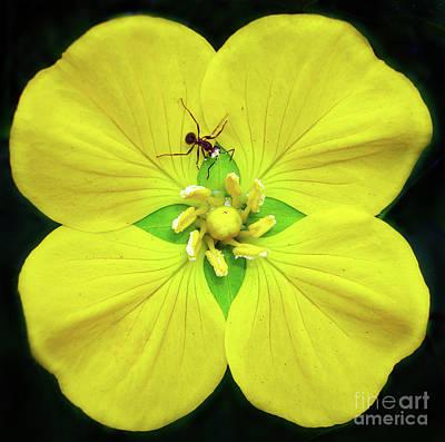 Insects Digital Art - Pollination.. by Prar Kulasekara