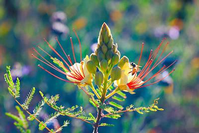 Photograph - Pollination by Ram Vasudev