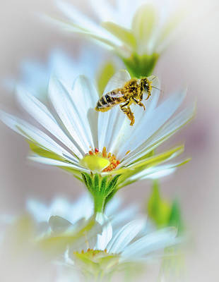 Photograph - Pollinator by Mark Dunton