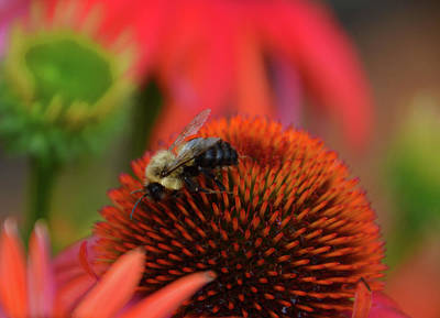 Photograph - Pollinator by Mike Martin