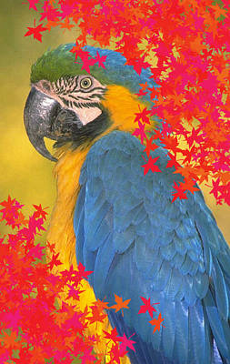 Photograph - Polly Parrot by Mary J Tait