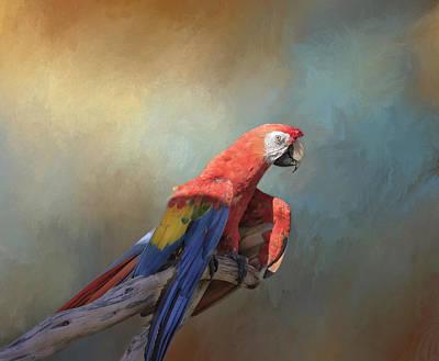 Scarlet Macaw Photograph - Polly Want A Cracker by Kim Hojnacki