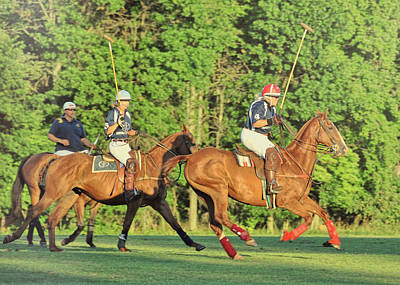 Photograph - Polo Ponies by JAMART Photography