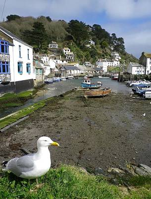 Photograph - Polperro Harbour Cornwall And Seagull by Richard Brookes