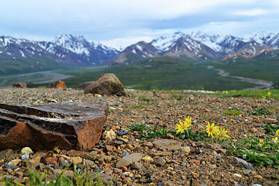 Photograph - Polychrome Pass, Denali by Zawhaus Photography