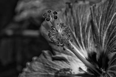 Photograph - Polynesian Pollen by Christi Kraft