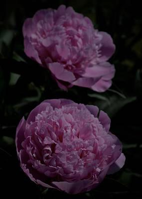 Photograph - Pom Pom by Photography by Tiwago