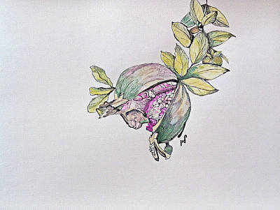Tasty Drawing - Pomegranate by Maria Woithofer