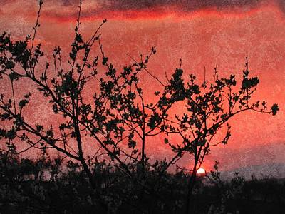 Photograph - Pomegranate Sunset by Dorothy Berry-Lound