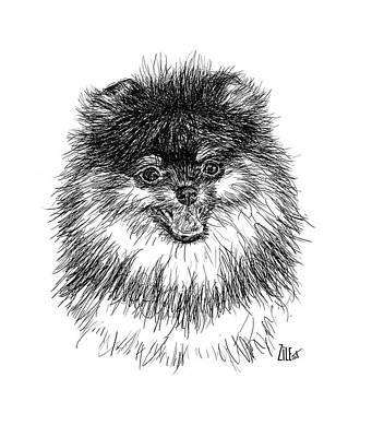 Digital Art - Pomeranian @familia_lulupom by ZileArt