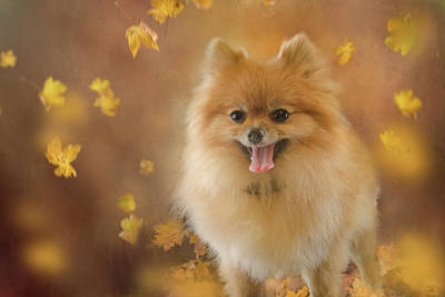 Dog Lovers Photograph - Pomeranian by Margaret Goodwin
