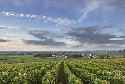 Burgundy Photograph - Pommard - Burgundy by Rod McLean