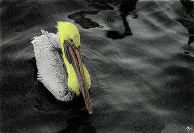 Photograph - Pompano Pelican by Wayne King