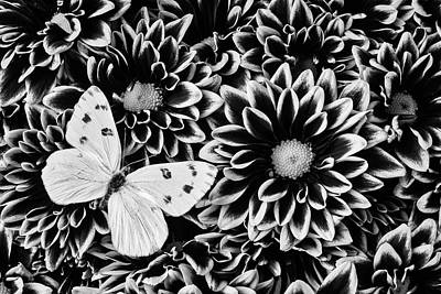 Pom Photograph - Poms And Butterfly by Garry Gay