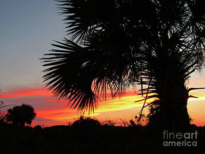 Photograph - Ponce Inlet Florida Sunset by Ron Tackett