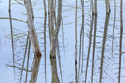 Photograph - Pond Abstract by Alan L Graham