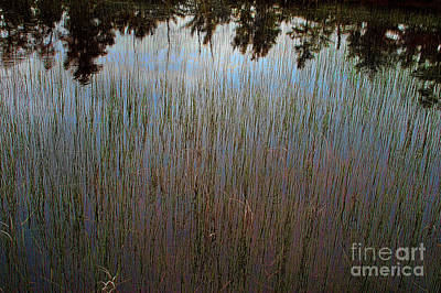 Photograph - Pond Abstract by Randy Pollard
