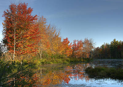 Photograph - Pond And Foliage by John Clark