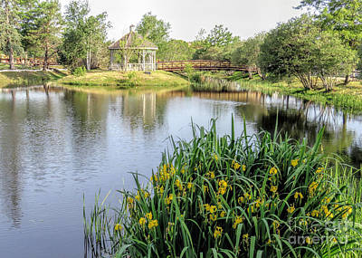 Pond And Gazebo At Cordage Park   Art Print by Janice Drew